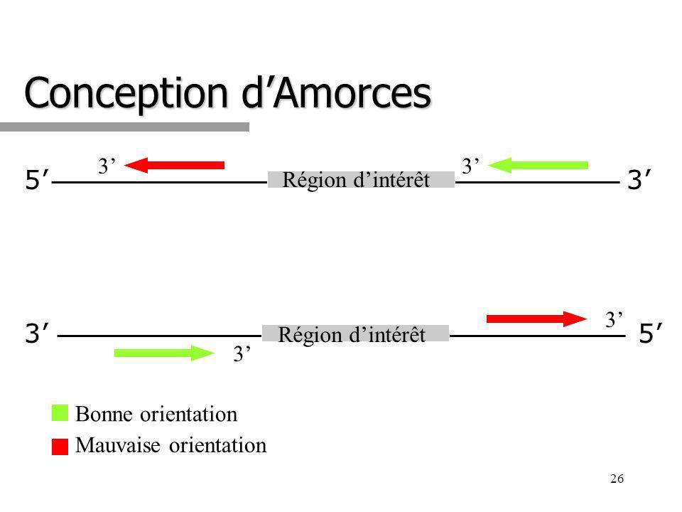 Conception d'Amorces 5' 3' 3' 5' 3' 3' Région d'intérêt 3'