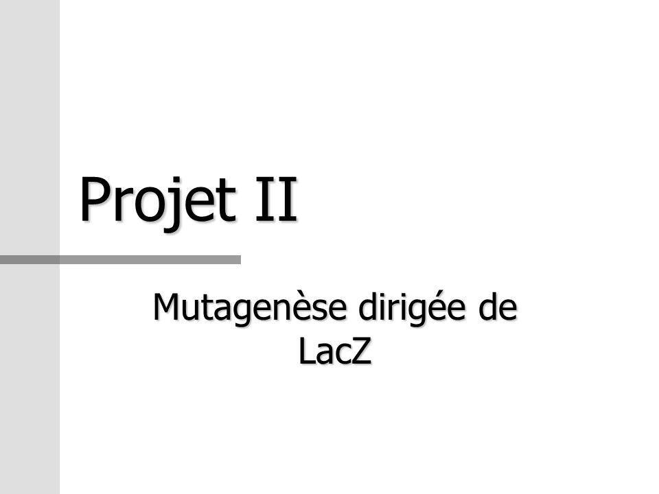 Mutagenèse dirigée de LacZ