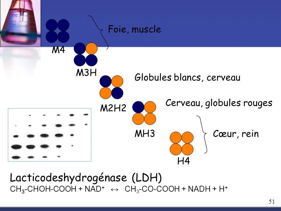 Lacticodeshydrogénase (LDH)