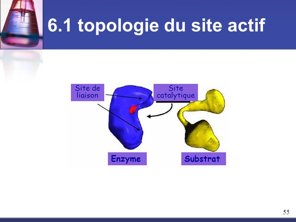 6.1 topologie du site actif