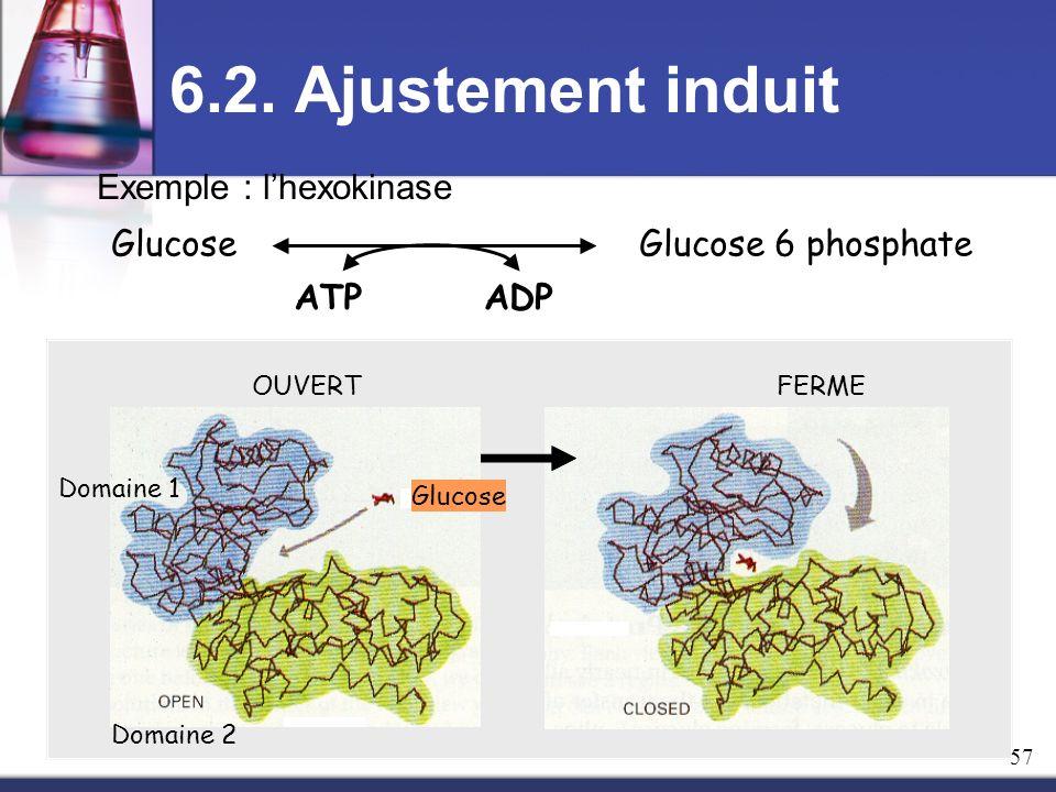 6.2. Ajustement induit Exemple : l'hexokinase ATP ADP