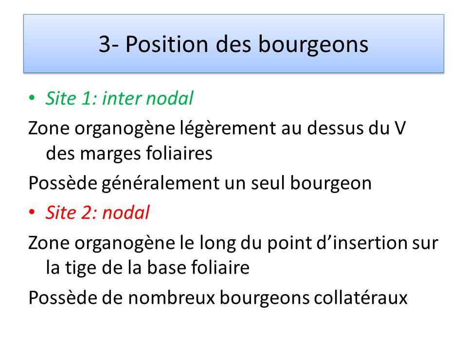 3- Position des bourgeons