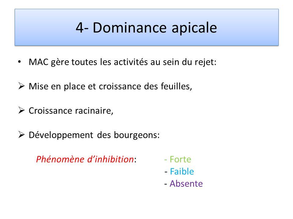 4- Dominance apicale MAC gère toutes les activités au sein du rejet: