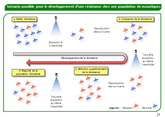 Scénario possible pour le développement d'une résistance chez une population de moustiques