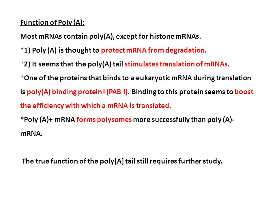 Function of Poly (A): Most mRNAs contain poly(A), except for histone mRNAs. *1) Poly (A) is thought to protect mRNA from degradation.