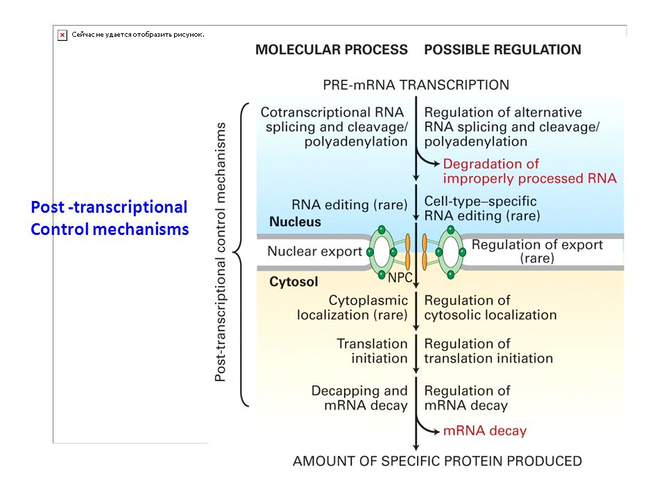 Post -transcriptional