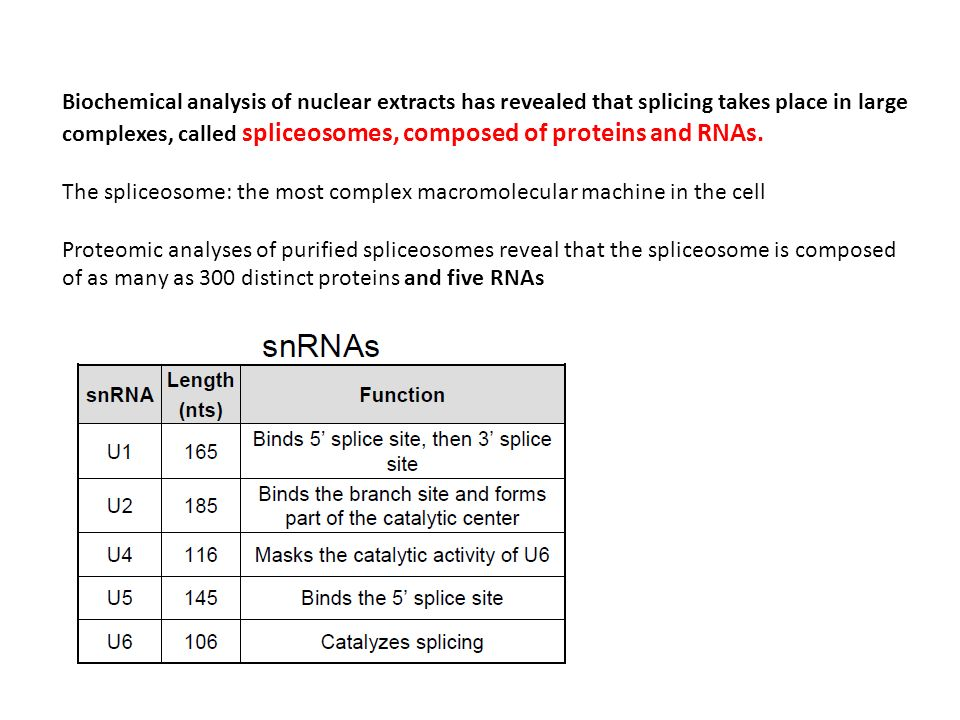 Biochemical analysis of nuclear extracts has revealed that splicing takes place in large complexes, called spliceosomes, composed of proteins and RNAs.