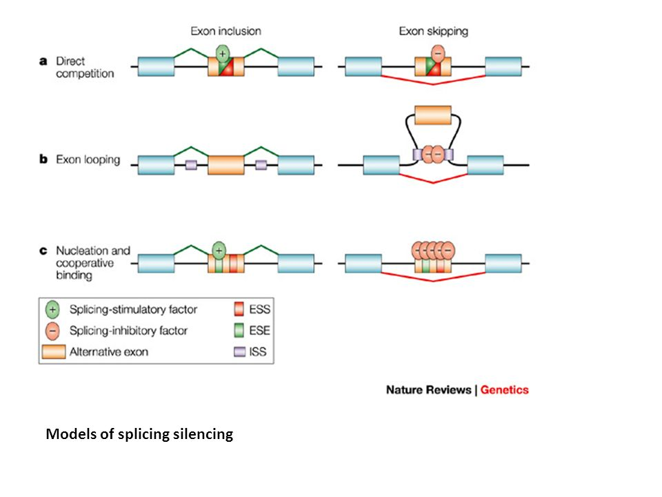 Models of splicing silencing