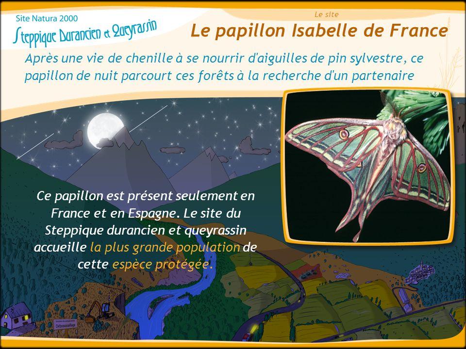 Le papillon Isabelle de France