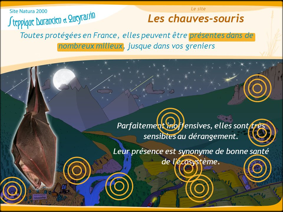 Le site Les chauves-souris. Toutes protégées en France, elles peuvent être présentes dans de nombreux milieux, jusque dans vos greniers.
