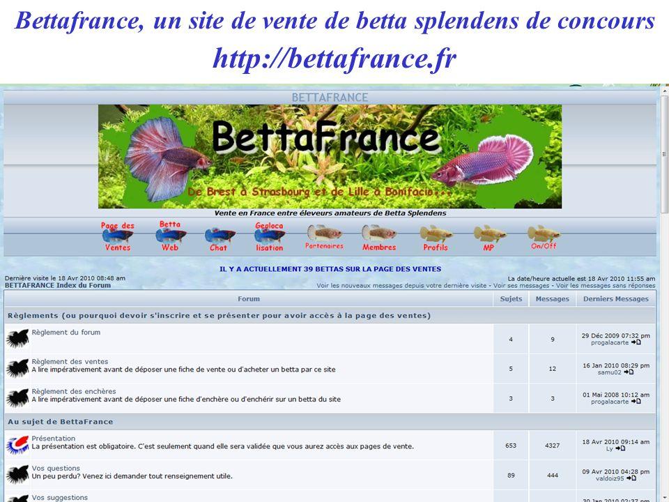 Bettafrance, un site de vente de betta splendens de concours