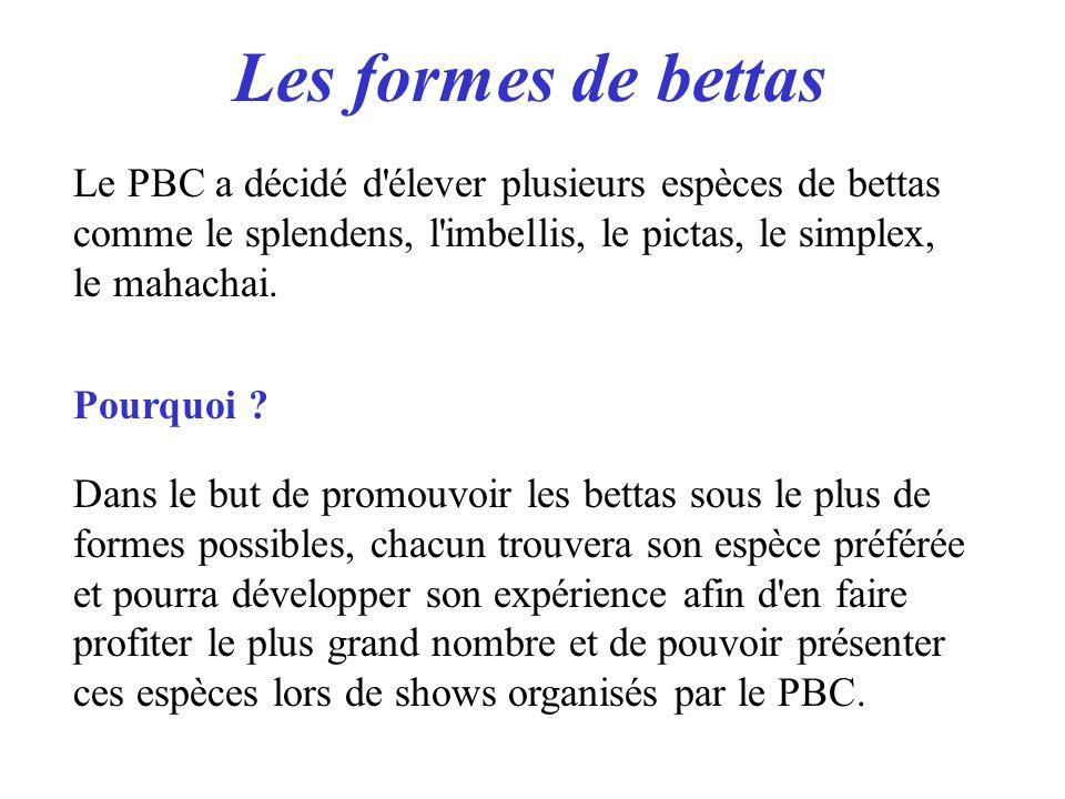 Les formes de bettas Le PBC a décidé d élever plusieurs espèces de bettas comme le splendens, l imbellis, le pictas, le simplex, le mahachai.