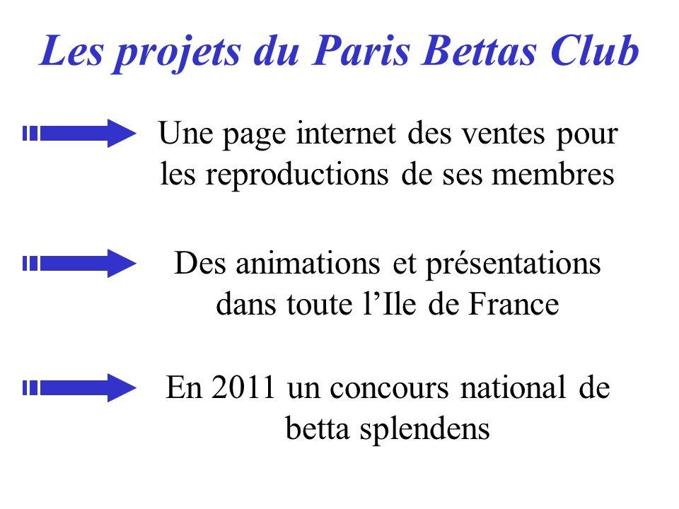 Les projets du Paris Bettas Club