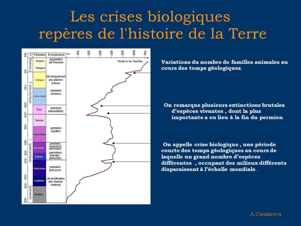 Les crises biologiques repères de l histoire de la Terre