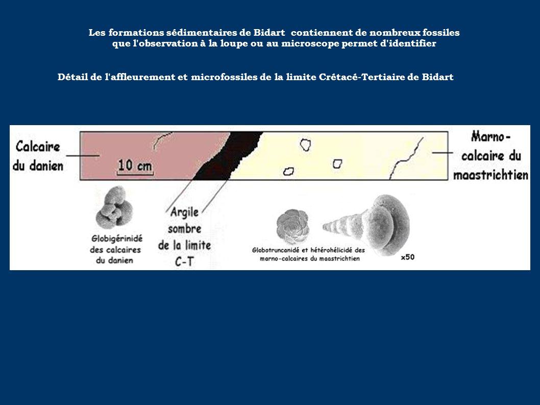 Les formations sédimentaires de Bidart contiennent de nombreux fossiles que l observation à la loupe ou au microscope permet d identifier