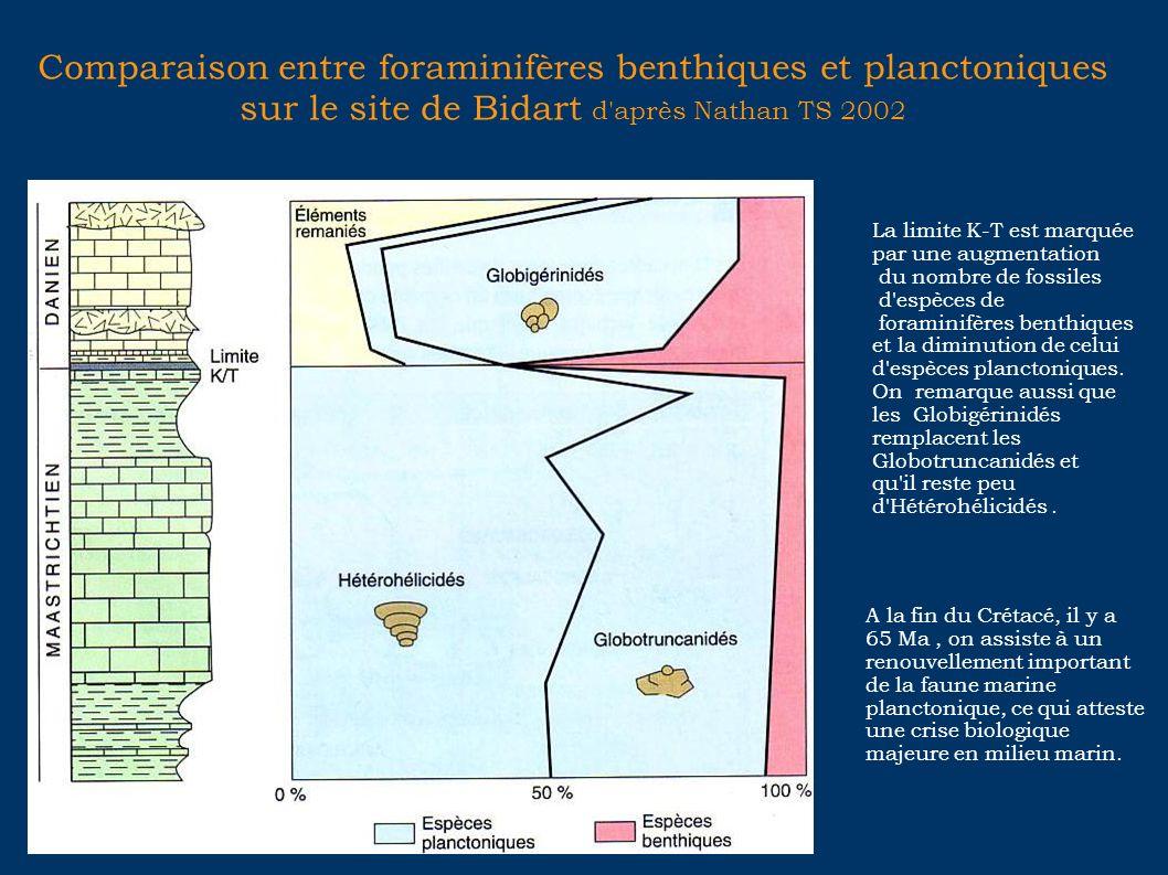 Comparaison entre foraminifères benthiques et planctoniques sur le site de Bidart d après Nathan TS 2002