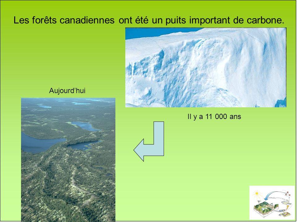 Les forêts canadiennes ont été un puits important de carbone.