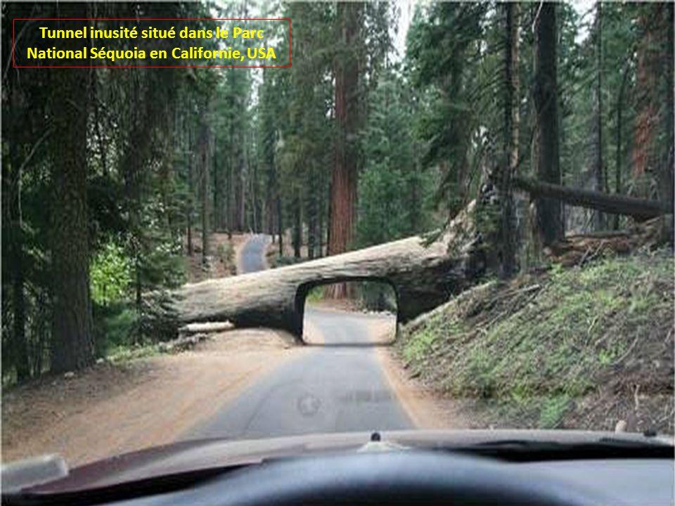 Tunnel inusité situé dans le Parc National Séquoia en Californie, USA