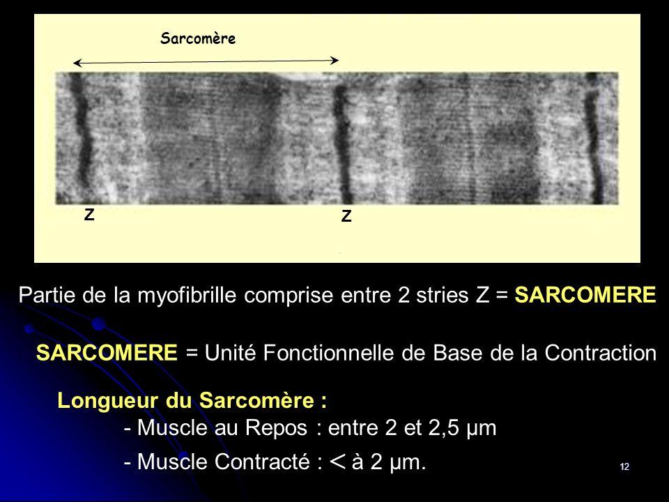 Partie de la myofibrille comprise entre 2 stries Z = SARCOMERE