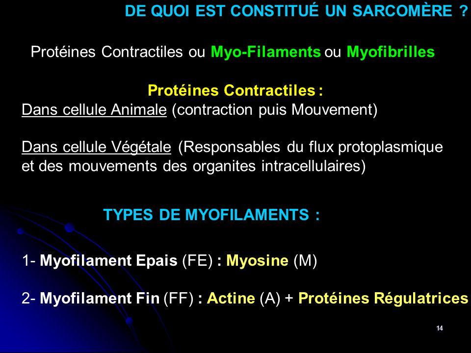 DE QUOI EST CONSTITUÉ UN SARCOMÈRE Protéines Contractiles :