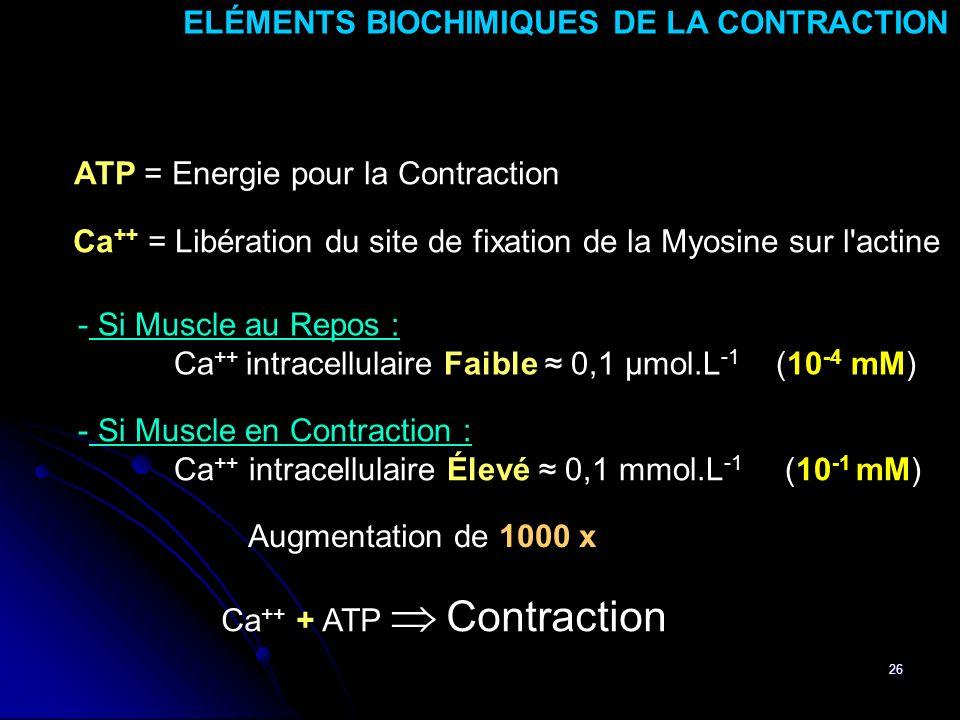 ELÉMENTS BIOCHIMIQUES DE LA CONTRACTION