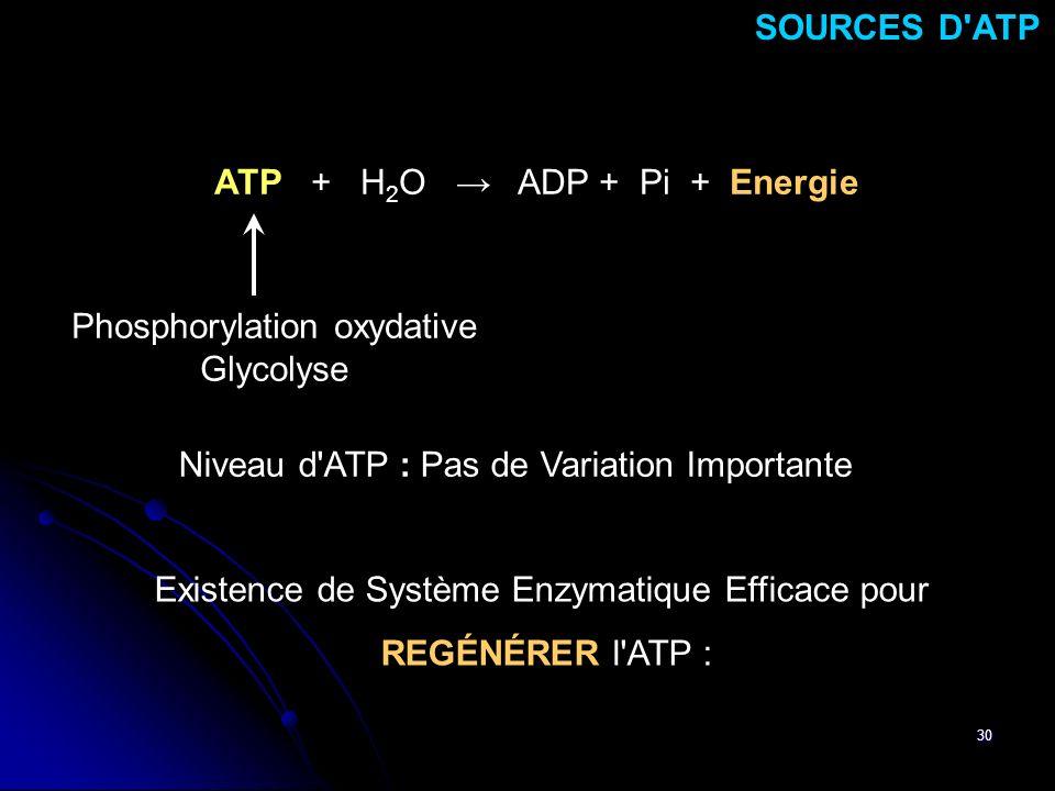 ATP + H2O → ADP + Pi + Energie