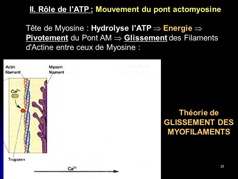 Théorie de GLISSEMENT DES MYOFILAMENTS