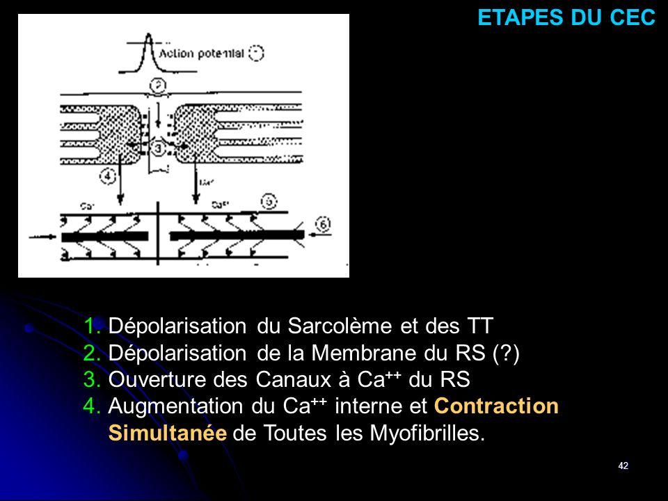 ETAPES DU CEC Dépolarisation du Sarcolème et des TT. Dépolarisation de la Membrane du RS ( ) Ouverture des Canaux à Ca++ du RS.