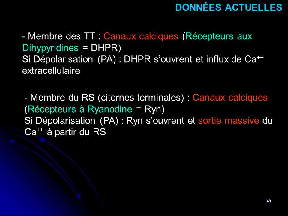DONNÉES ACTUELLES - Membre des TT : Canaux calciques (Récepteurs aux Dihypyridines = DHPR)