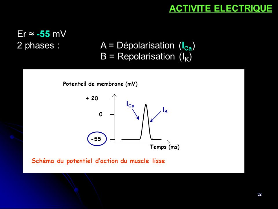 2 phases : A = Dépolarisation (ICa) B = Repolarisation (IK)