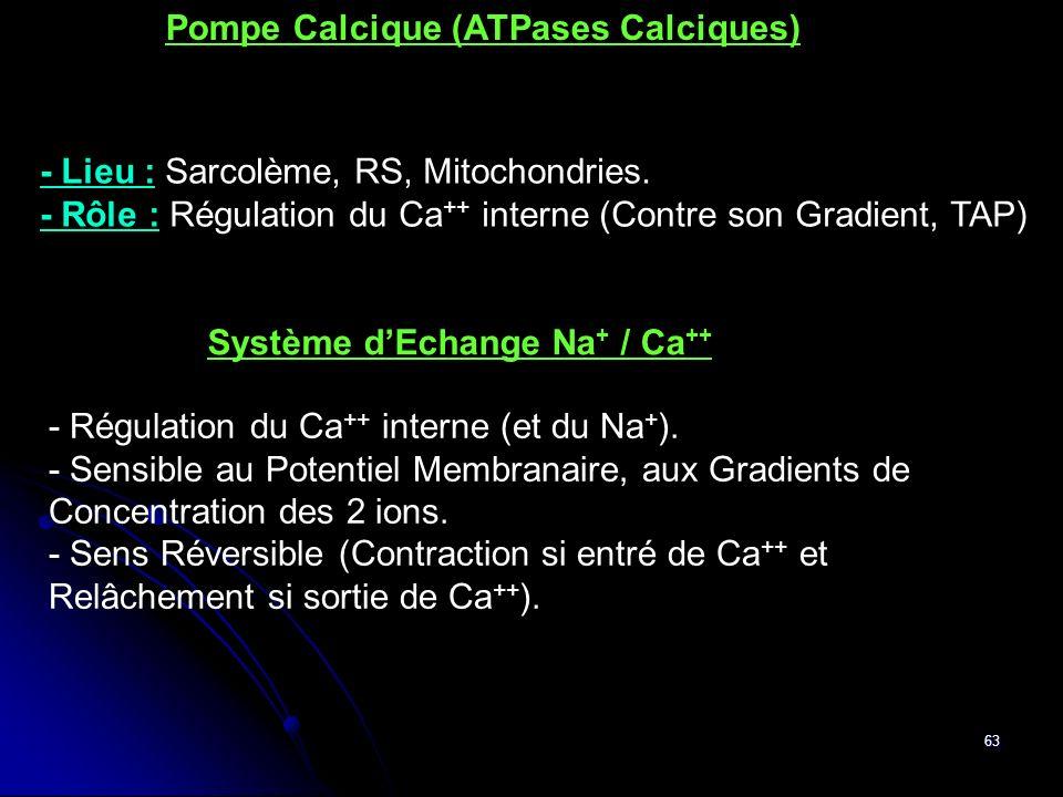 Pompe Calcique (ATPases Calciques)