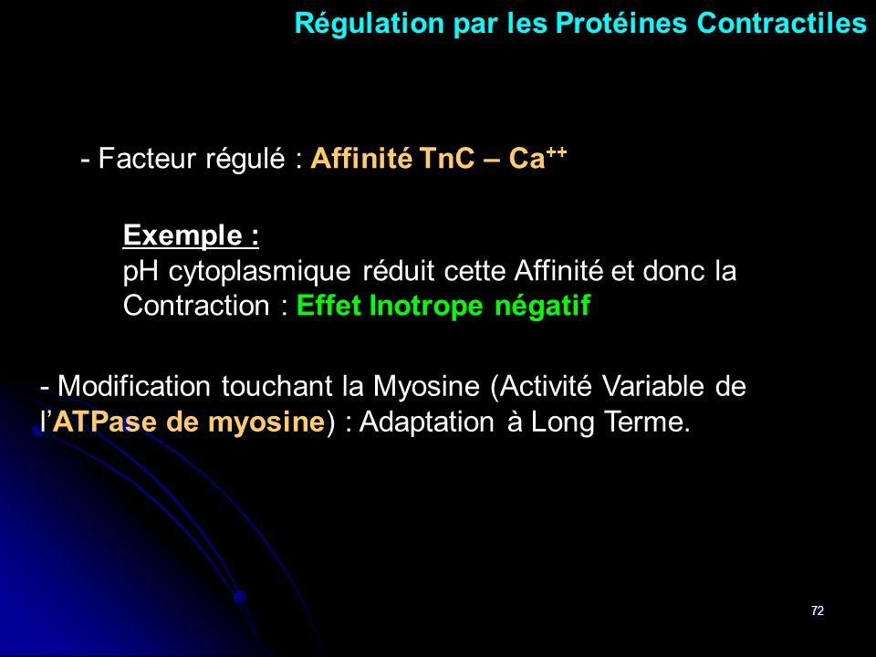 Régulation par les Protéines Contractiles