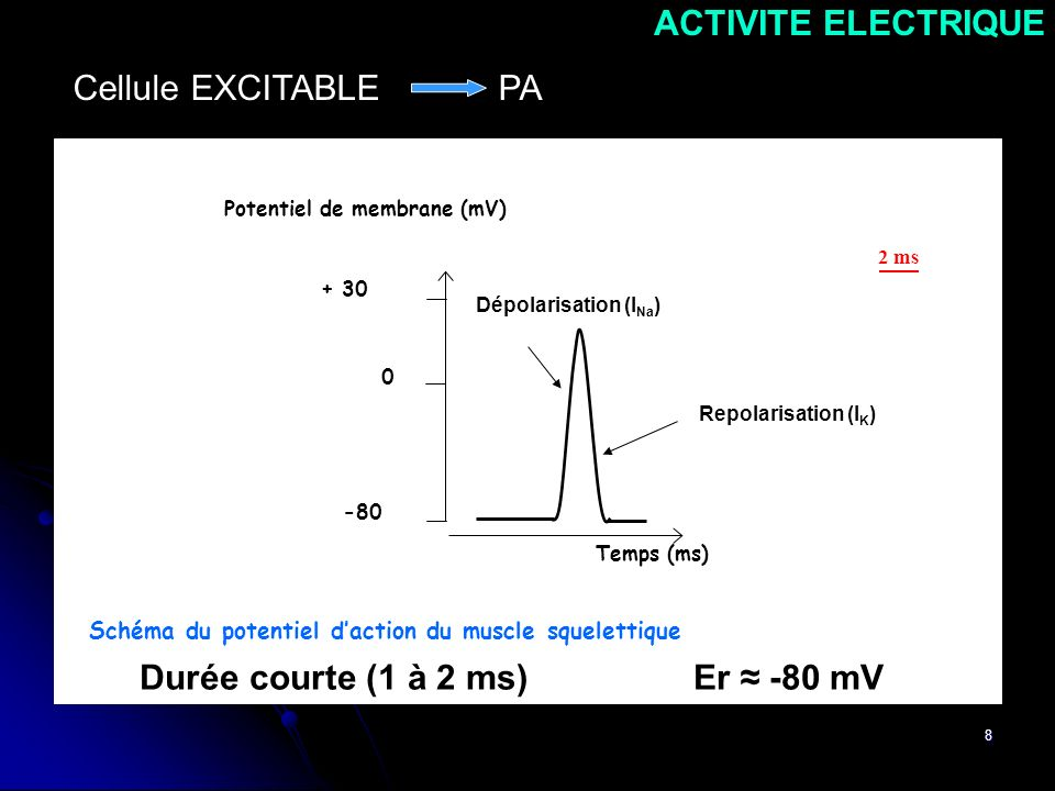 Durée courte (1 à 2 ms) Er ≈ -80 mV