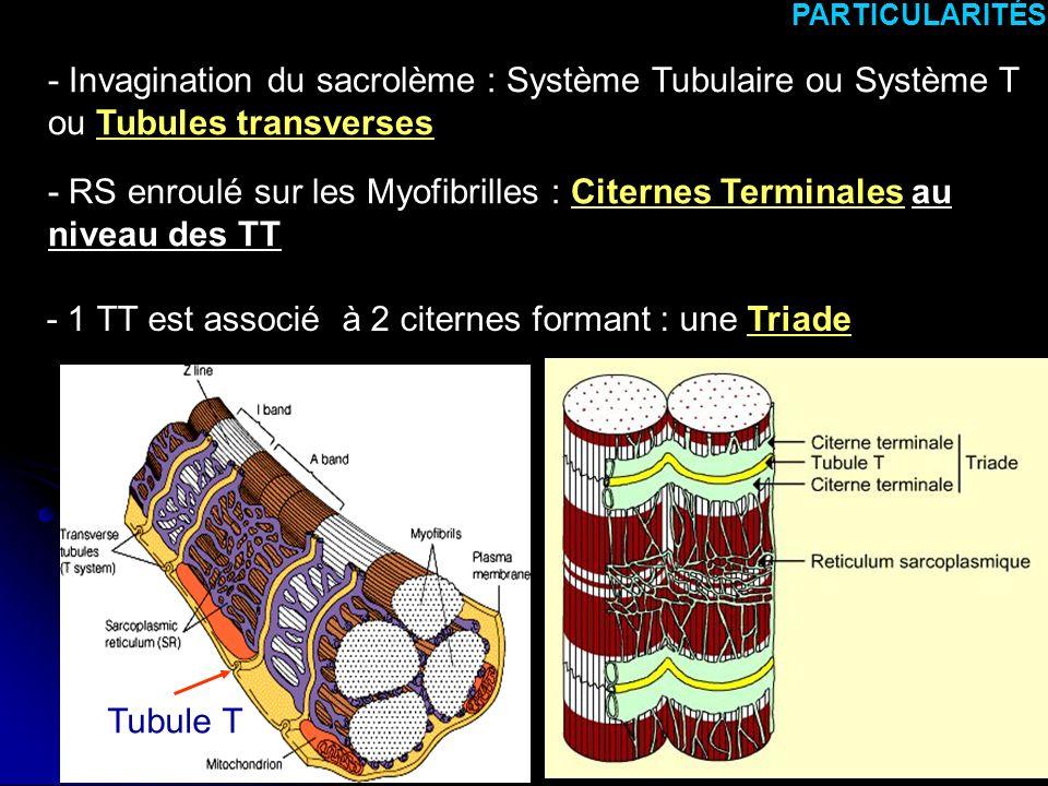 - 1 TT est associé à 2 citernes formant : une Triade
