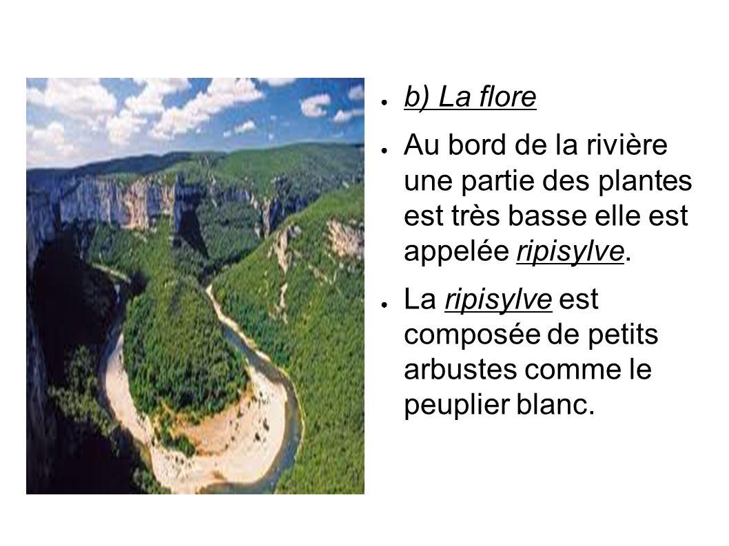 b) La flore Au bord de la rivière une partie des plantes est très basse elle est appelée ripisylve.