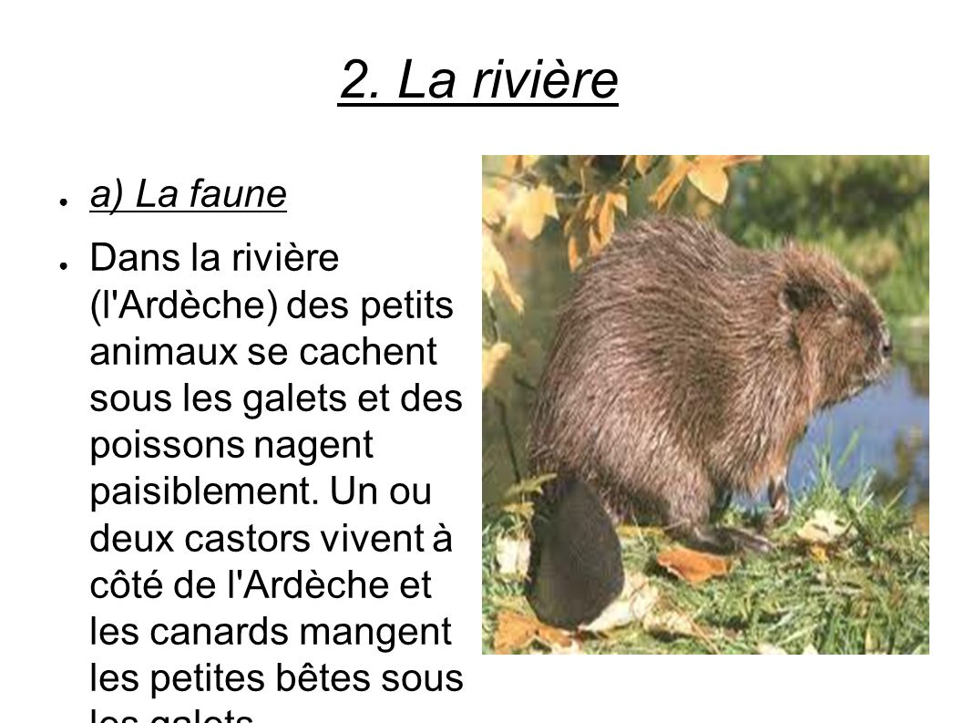 2. La rivière a) La faune.
