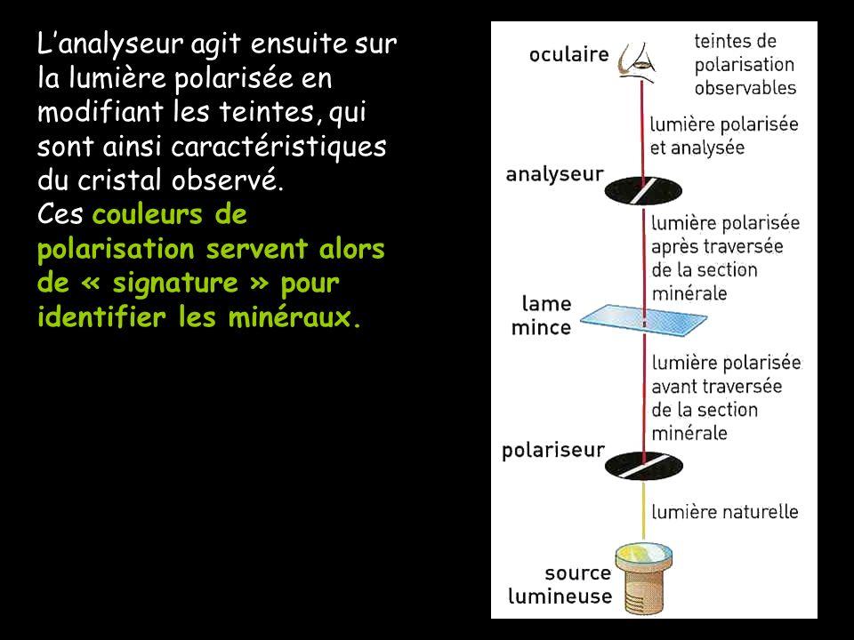 L'analyseur agit ensuite sur la lumière polarisée en modifiant les teintes, qui sont ainsi caractéristiques du cristal observé.
