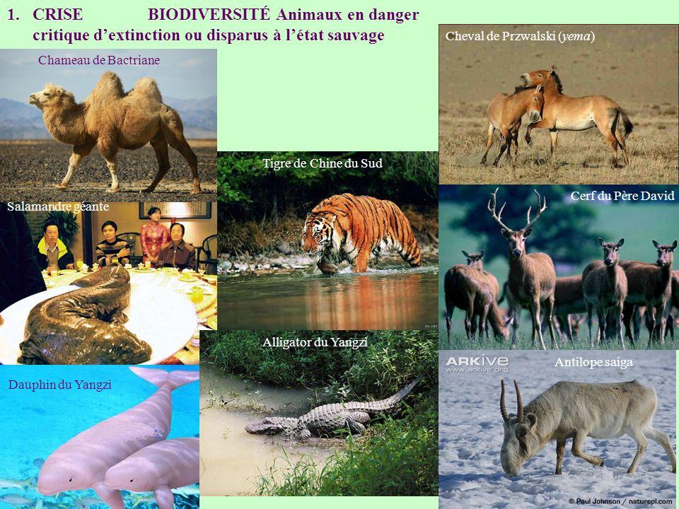 CRISE BIODIVERSITÉ Animaux en danger critique d'extinction ou disparus à l'état sauvage