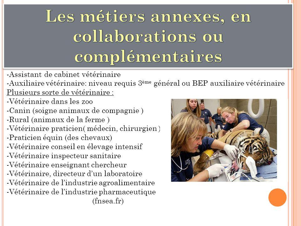Les métiers annexes, en collaborations ou complémentaires