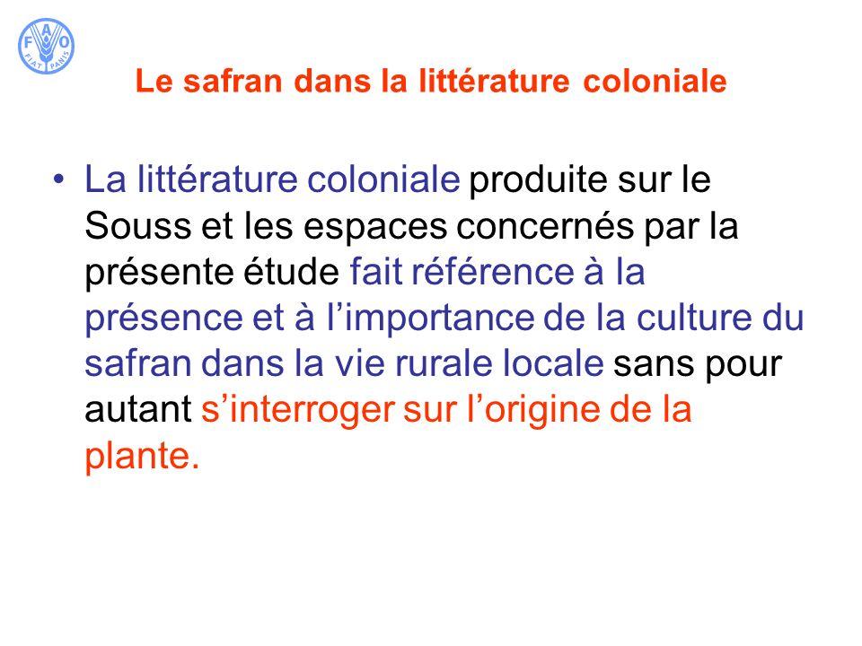Le safran dans la littérature coloniale