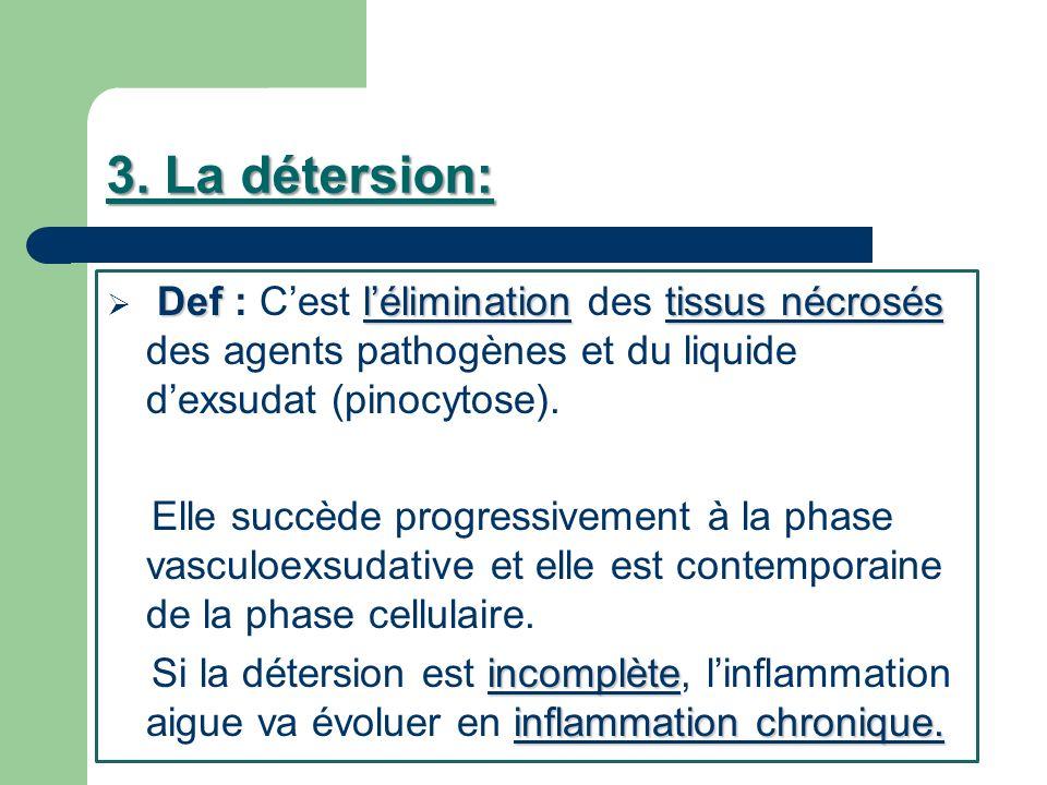 3. La détersion: Def : C'est l'élimination des tissus nécrosés des agents pathogènes et du liquide d'exsudat (pinocytose).