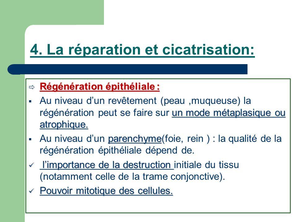 4. La réparation et cicatrisation:
