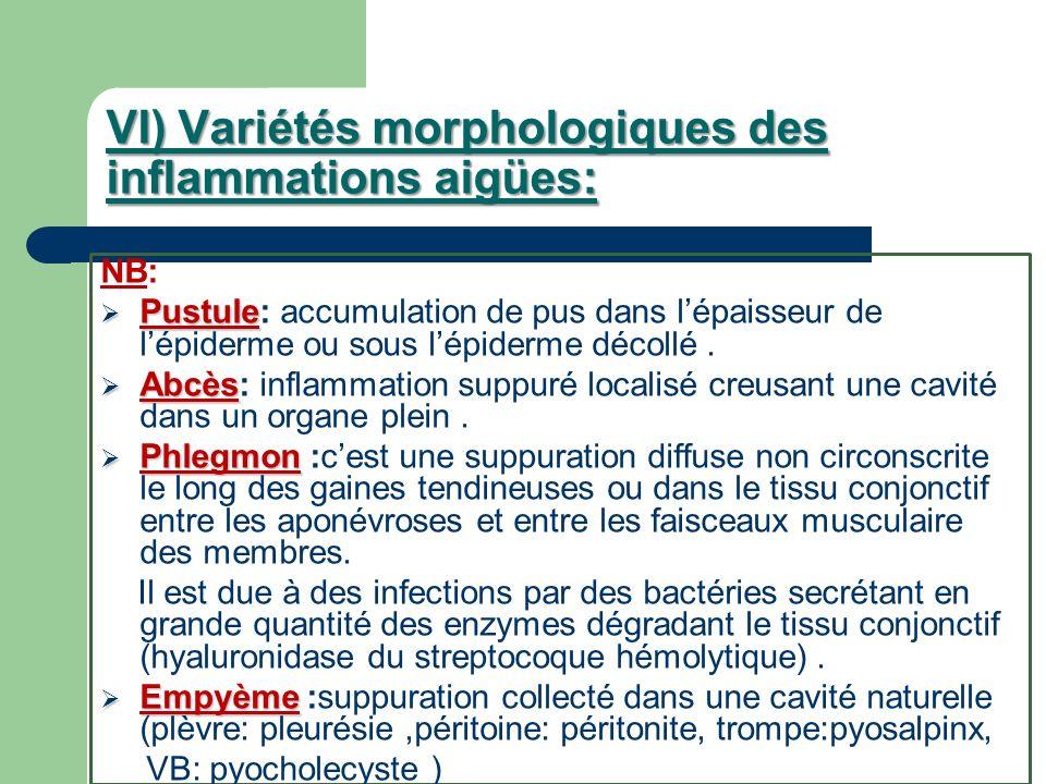 VI) Variétés morphologiques des inflammations aigües: