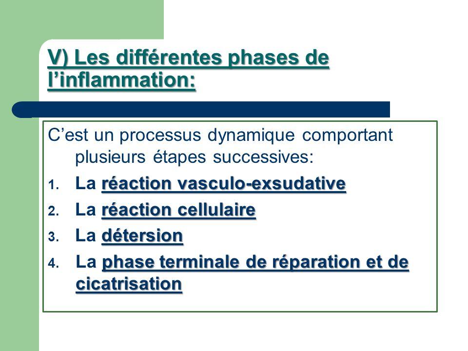 V) Les différentes phases de l'inflammation: