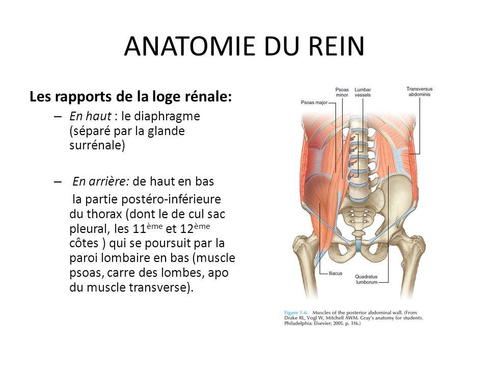 Charmant Anatomie Des Gesäßes Fotos - Anatomie Von Menschlichen ...