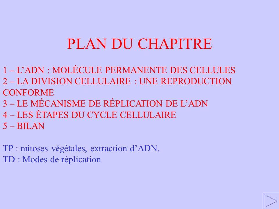 PLAN DU CHAPITRE 1 – L'ADN : MOLÉCULE PERMANENTE DES CELLULES
