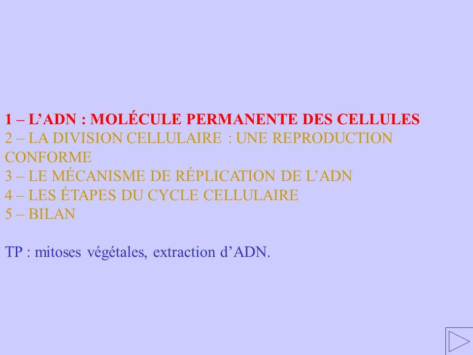 1 - L'ADN : MOLÉCULE PERMANENTE DES CELLULES
