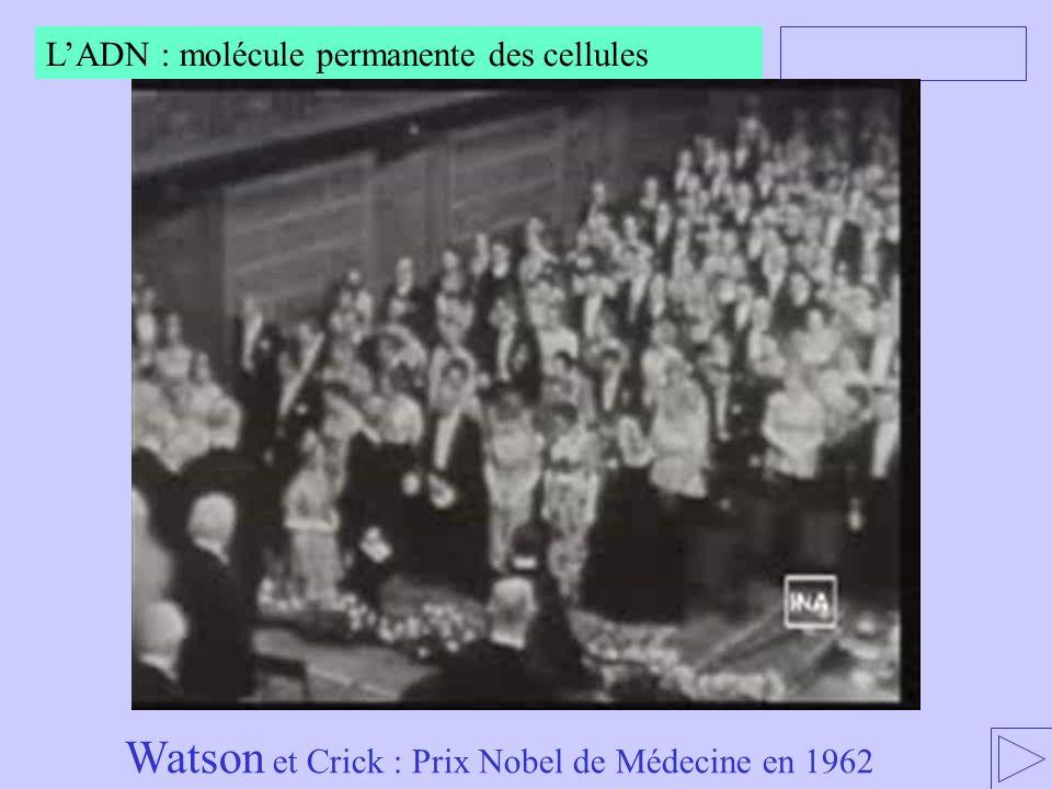 Watson et Crick : Prix Nobel de Médecine en 1962