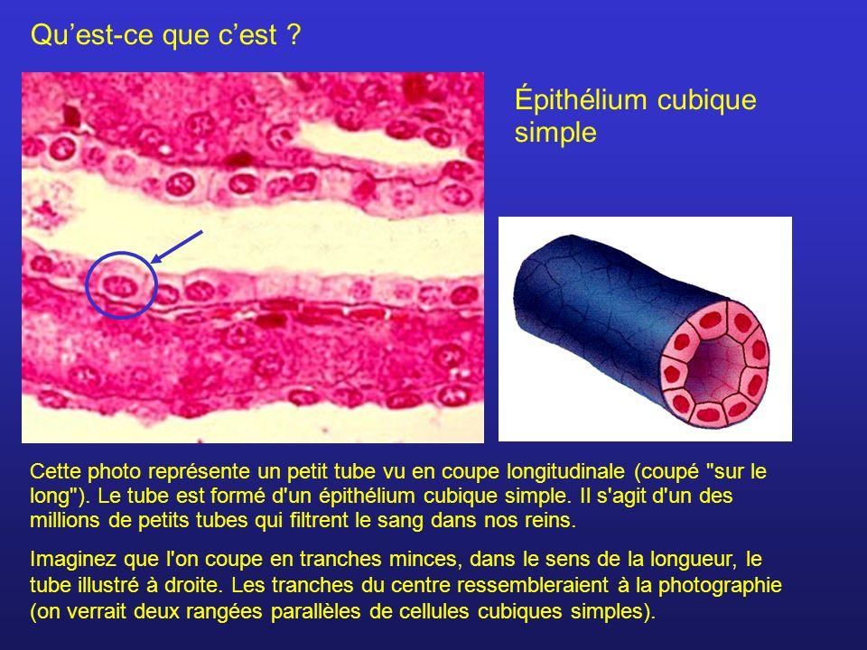 Tissu atomes mol cules cellules ppt t l charger - Qu est ce que la coupe gambardella ...