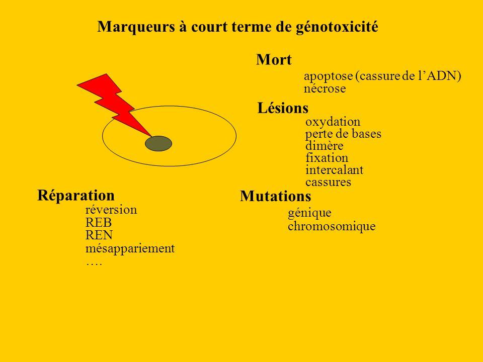 Marqueurs à court terme de génotoxicité